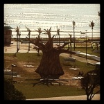 COP 17 Baobab On the Durban Beachfront